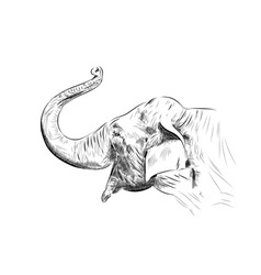 Sketch of elephant on the white vector