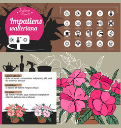 Template for indoor plant impatiens tipical vector