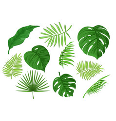 Tropical carved and solid green apart leaves vector