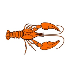 color crawfish vector image vector image