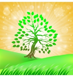 Summer green tree vector