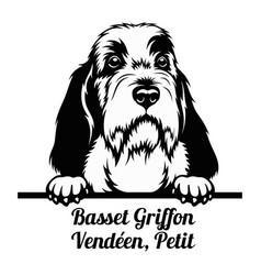 peeking dog - basset griffon venden petit breed vector image