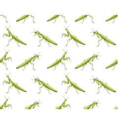 Seamless pattern mantis on white background vector