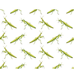 Seamless pattern of mantis on white background vector