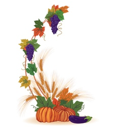 vine ears and pumpkins vector image