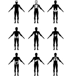 human organs in body icons vector image