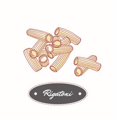 Hand drawn pasta rigatoni isolated on white vector