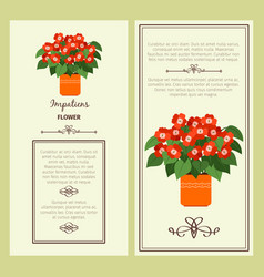 impatiens flower in pot banners vector image
