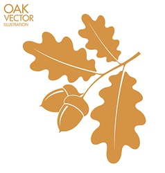 Oak branch vector