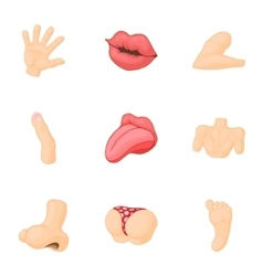 Outer part of body icons set cartoon style vector