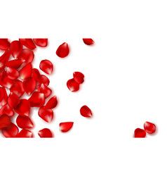 Red rose petals and beads on white background vector
