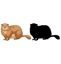 set groundhog characters and its silhouette on vector image
