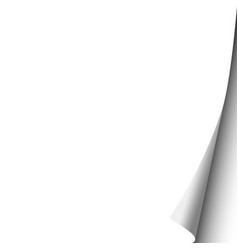 sheet of white paper with curled corner template vector image