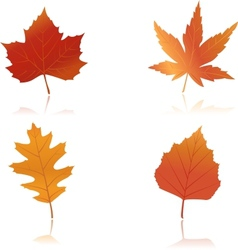 Vibrantly colored autumn leaves vector