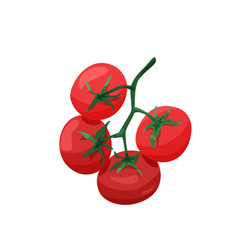 branch red tomatoes in bright color cartoon vector image