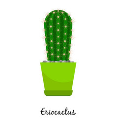 Eriocactus cactus in pot vector