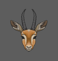 Head of antelope portrait of wild animal hand vector