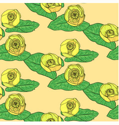 nuphar lutea pattern vector image