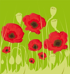 poppy flowers on green background vector image