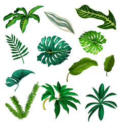 set tropic and exotic leaf watercolor tree vector image