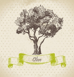 Olive tree hand drawn vector