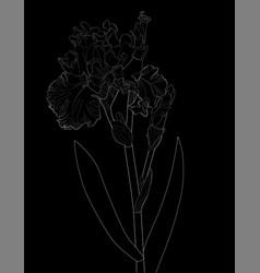 A sketch a blooming iris vector