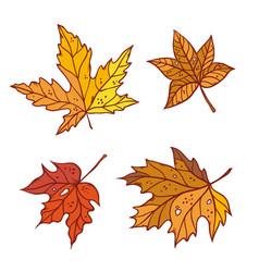 Autumn maple leaves set september or october leaf vector