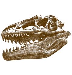 Engraving of tyrannosaurus skull vector