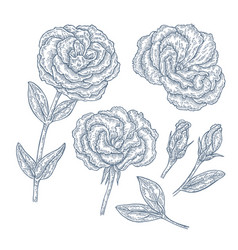 Hand drawn eustoma garden flowers and leaves vector