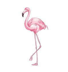 pink flamingo hand drawn cute vector image