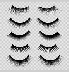 realistic detailed 3d feminine black lashes set vector image