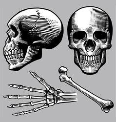 hand drawn human skull set vector image vector image