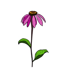 Color hand drawing flower Echinacea vector