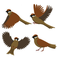 Set sparrows isolated on a white background vector