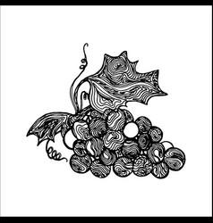 grape ink sketch vector image