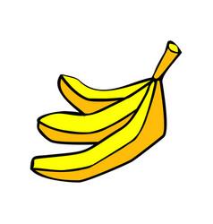 banana bunch isolated yellow fruit on white vector image