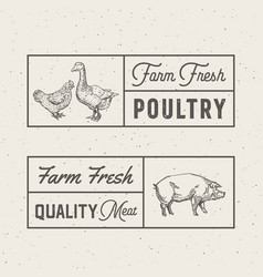 farm fresh poultry and meat abstract signs vector image vector image