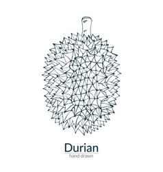Durian on a white background vector