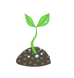 growing small green plant with two leaves and vector image