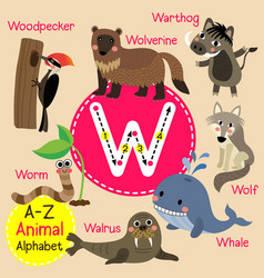 Letter w tracing walrus warthog whale wolf vector