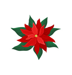 poinsettia with bright red petals and green leaves vector image