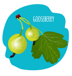 Gooseberry with green leaf on blue background vector
