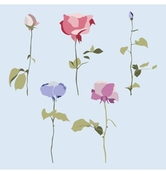 set of flowers multicolored roses with vector image