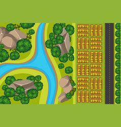 Aerial view vegetable garden vector