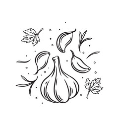 falling garlic with herbs and spices vector image