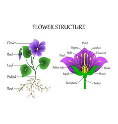 Flower structure vector