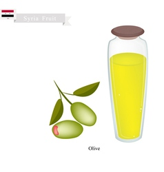 Ripe Olive A Popular Fruit in Syria vector