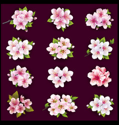set cherry and apple blossom vector image
