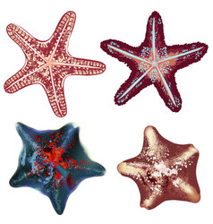 set realistic starfishes for design vector image