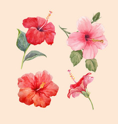 Watercolor hibiscus set vector